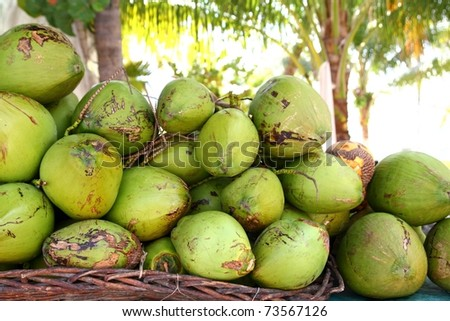 Fresh tender coconuts green mound Caribbean Mexico tropical beverage