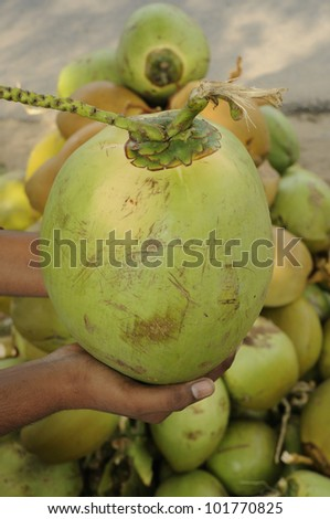 fresh tender green coconuts