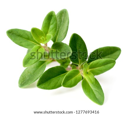 fresh thyme herb isolated on the white background Stock photo ©