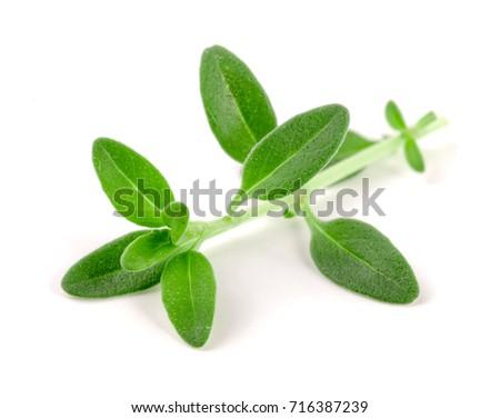 Fresh thyme spice isolated on white background Photo stock ©