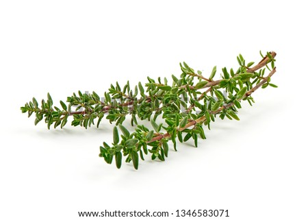 Fresh thyme sprigs, spice, close-up, isolated on white background. Stock photo ©