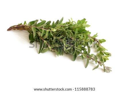 Fresh thyme twigs on a white background