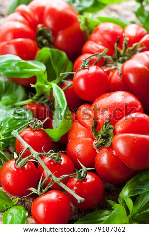 fresh tomatoes and basil on the wooden background