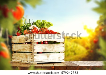 fresh tomatoes and summer day  #579249763