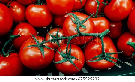 fresh tomatoes. red tomatoes background. Group of tomatoes #675525292