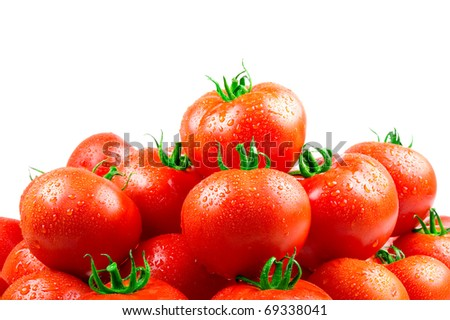 Fresh tomatoes with dew