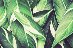 Fresh tropical Green leaves background