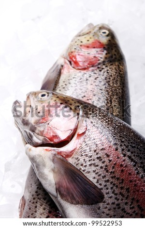 Fresh trout over white background