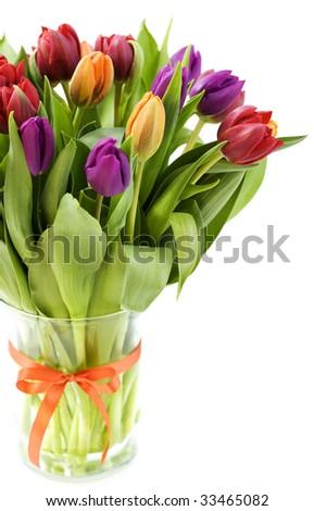 fresh tulips on white background