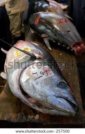 Fresh tuna in Tsukiji fish market, Tokyo, Japan