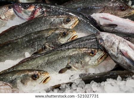 Eastern little tuna - photo#46