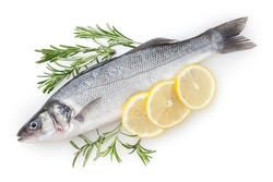 Fresh uncooked seabass with lemon and rosemary isolated on white background