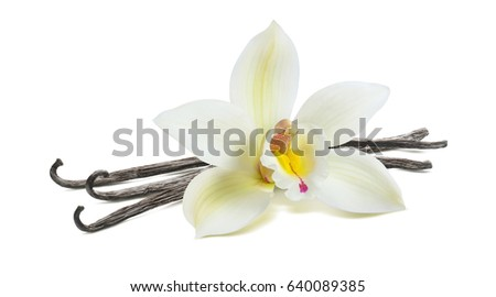 Fresh vanilla flower and dry pods isolated on white background