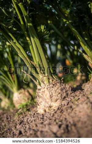 Fresh vegatables from garden Zdjęcia stock ©