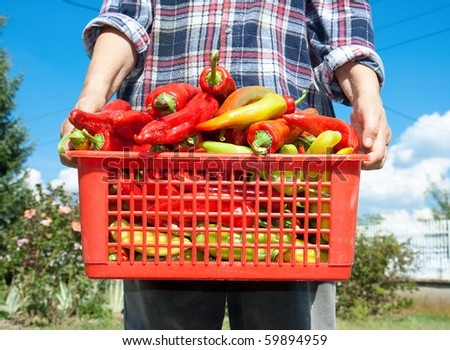 Fresh vegetable in wooden basket