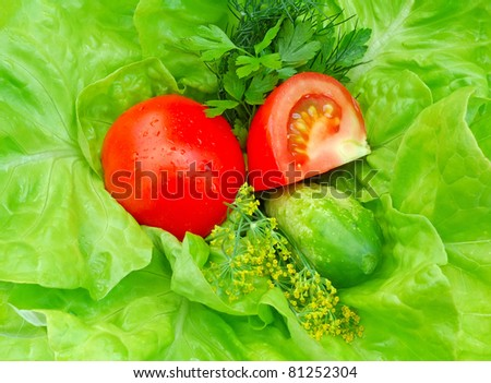 Fresh vegetables and greenery on green salad