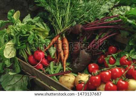 Fresh vegetables, potato, radish, tomato, carrot, beetroot in wooden box on ground on farm at sunset. Freshly bunch harvest. Healthy organic food, agriculture, close up