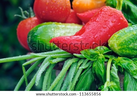 Fresh vegetables. Tomato, red pepper, cucumber, green onions