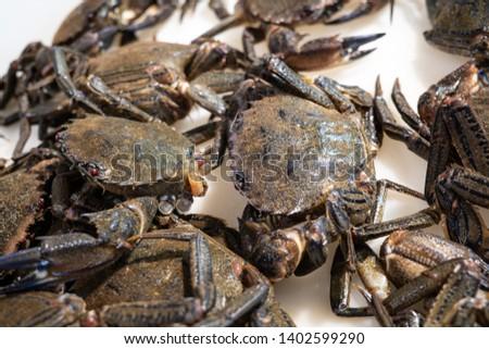 Fresh Velvet crab for sale in the market. Necora puber. Necora from Galicia, Spain Stockfoto ©