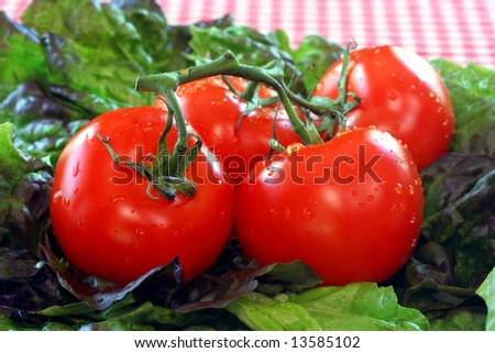 Fresh washed tomatoes and lettuce
