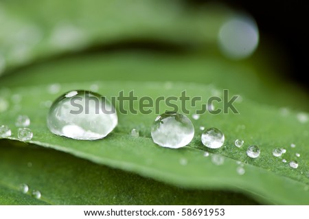 fresh water droplets on leaf close up as in after rain