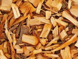 Fresh wet wood chip from alder tree, nature texture