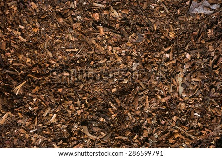 Free Photos Fresh Wet Wood Chip From Alder Tree Nature Texture