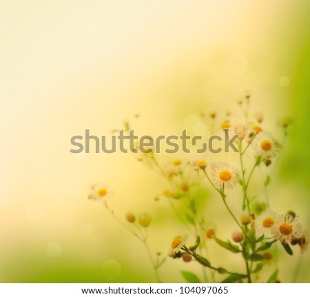 Fresh wildflowers over colorful background. Spring or summer floral background