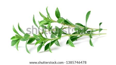 fresh Winter savory (Satureja montana) isolated on white background Photo stock ©