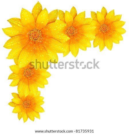 Fresh Yellow Flower Border, Isolated Over White Background Stock ...