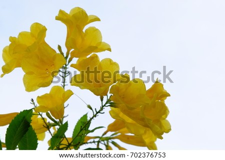 Fresh yellow flowers With green leaves and sky in bright days #702376753