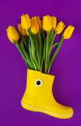 Fresh yellow spring flowers tulips in Rubber yellow rain boot on purple background. Spring concept