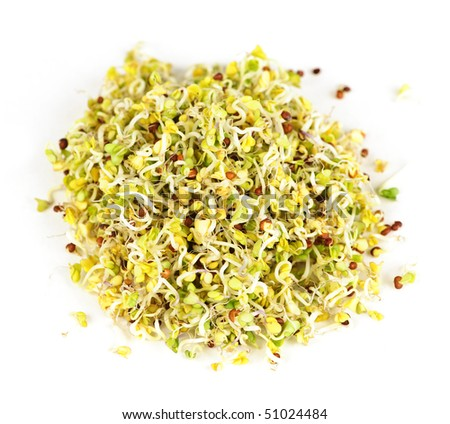 Fresh young alfalfa sprouts isolated on white background