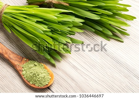 Fresh young barley grass with green barley grass powder and copy space #1036446697