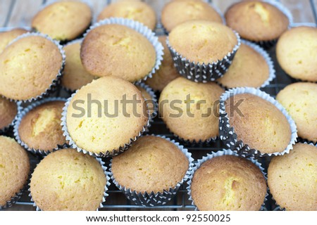 Freshly baked undecorated cupcakes standing cooling on a wire rack