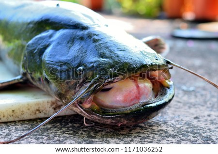 Freshly caught catfish Сток-фото ©