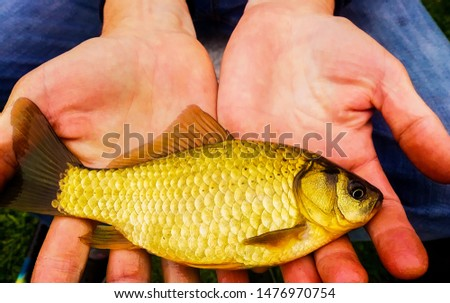 freshly caught fish carp in the hands of an angler blur background #1476970754