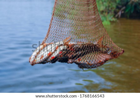 Photo of  Freshly caught fish in the net