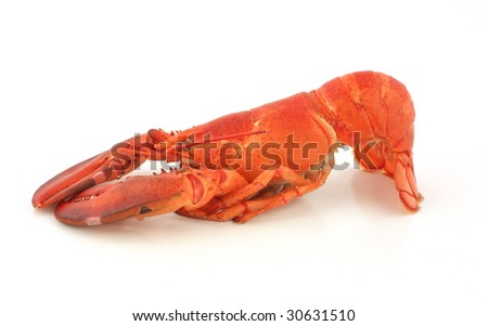 Freshly cooked Maine lobster