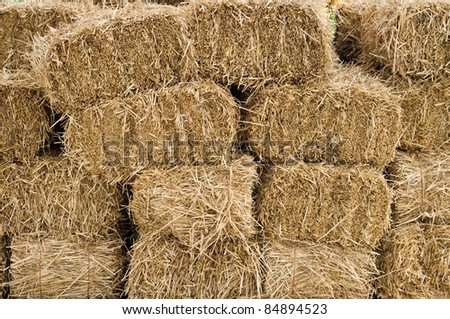 Freshly cut and baled hay stacked to dry