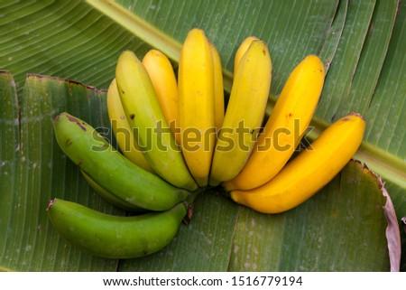 Freshly cut Canary Islands banana, Canarias, Spain