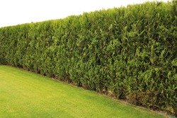 Freshly cut grass and decorative trimmed hedge in a well kept lawn. Copy or text space . Selective focus, shallow depth of field