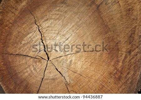 Freshly cut pine log showing tree rings in detail