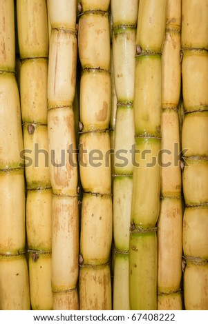 Freshly Cut Sugar Cane Group Together as a Texture Background