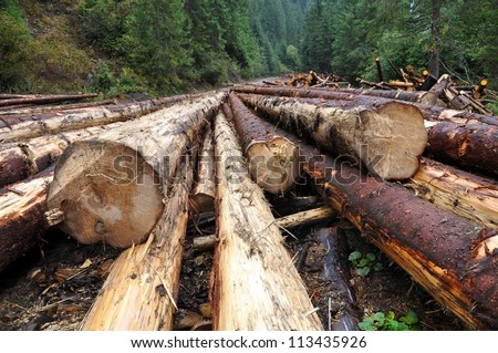 Freshly cut tree logs piled up near a forest road