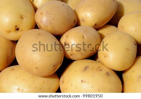 Freshly harvested Ceasar potatoes, Andalusia, Spain, Western Europe.
