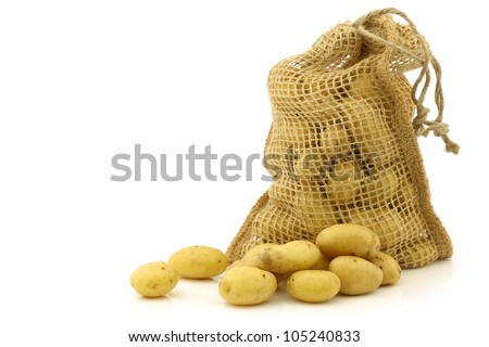 freshly harvested dutch seed potatoes (krieltjes) in a burlap sack on a white background