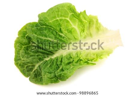 freshly harvested little gem lettuce leaf on a white background