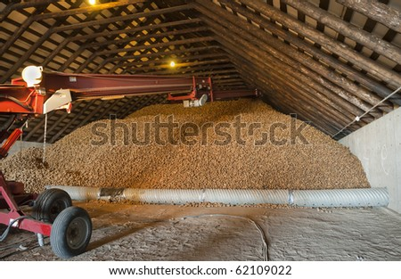 Freshly harvested potatoes are piled in a cellar for storage.