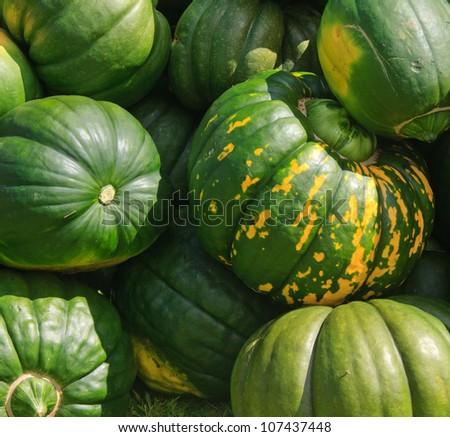 freshly harvested pumpkins